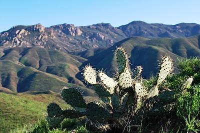 Photograph - Mountain Cactus Landscape by Matt Harang