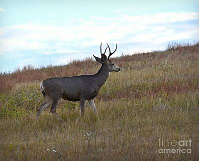 Photograph - Mountain Climbing Deer by Kathy M Krause