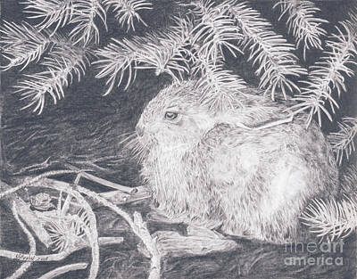 Drawing - Mountain Cottontail by Shevin Childers