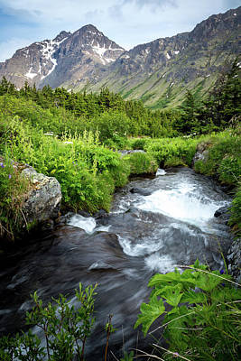 Photograph - Mountain Creek In Early Summer by Tim Newton