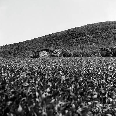 Photograph - Mountain Farm 1 by Patrick M Lynch