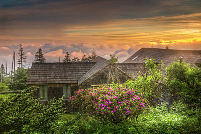 Photograph - Mountain Flowers At Sunrise by Debra and Dave Vanderlaan