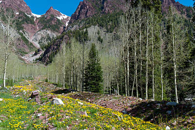 Photograph - Mountain Forest And Flowers In Springtime by Cascade Colors