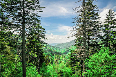Photograph - Mountain Forest by James L Bartlett