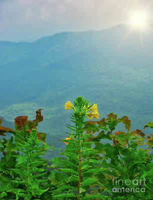 Photograph - Mountain Fowers -nc - Landscape by Adrian DeLeon