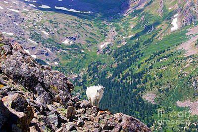 Photograph - Mountain Goat On Cliff by Steve Krull