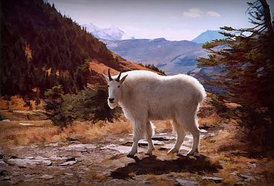 Photograph - Mountain Goat by Patricia Montgomery