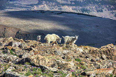 Photograph - Mountain Goats by Spencer Baugh
