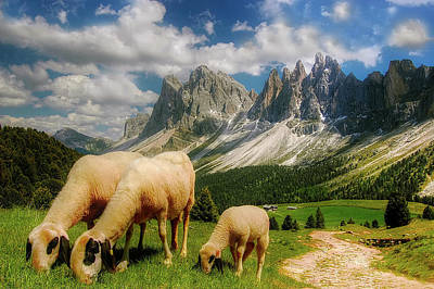 Photograph - Mountain Grazing by Kordi Vahle