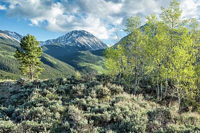 Photograph - Mountain Greens by Denise Bush