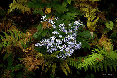 Photograph - Mountain High Wildflower Fern Art by Reid Callaway