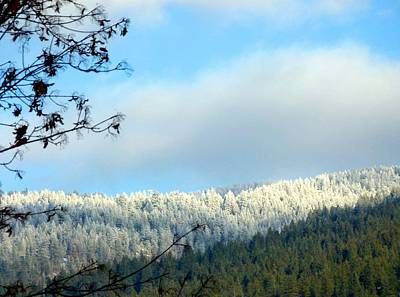 Photograph - Mountain Hoarfrost by Will Borden