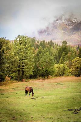 Photograph - Mountain Horse by Dallas Golden