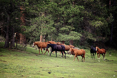 Photograph - Mountain Horses by John Meader