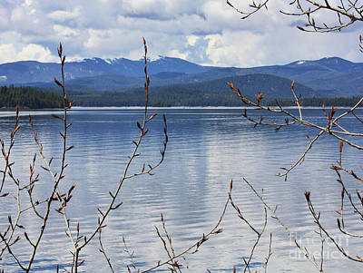 Photograph - Mountain Lake Through Spring Buds by Carol Groenen