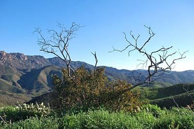 Photograph - Mountain Landscape - Bushes And Trees by Matt Harang