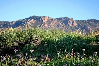 Photograph - Mountain Landscape View - Purple Flowers by Matt Harang