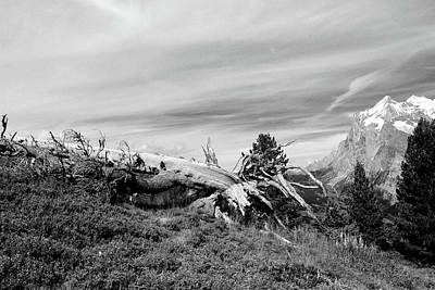 Mountain Landscape With Fallen Tree And View At Alps In Switzerland Art Print