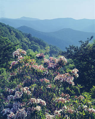 Photograph - 143412-mountain Laurel At Rockytop Overlook  by Ed  Cooper Photography
