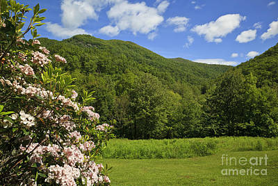 Photograph - Mountain Laurel by Jill Lang