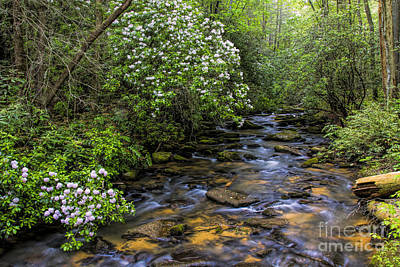 Photograph - Mountain Laurels Light Up Panther Creek by Barbara Bowen