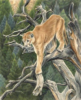 Drawing - Mountain Lion by Carla Kurt