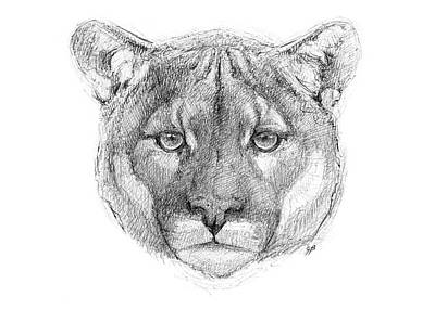 Yellowstone Drawing - Mountain Lion by George Bumann
