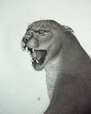 Drawing - Mountain Lion by Gilbert Photography And Art
