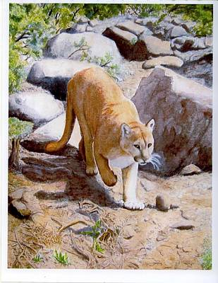 Painting - Mountain Lion In The Wild by Lorraine Foster
