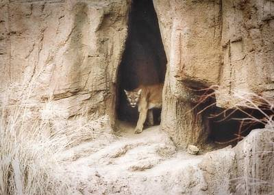 Photograph - Mountain Lion - Light by Judy Kennedy