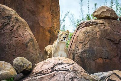 Thomas Kinkade - Mountain Lion by Pamela Williams