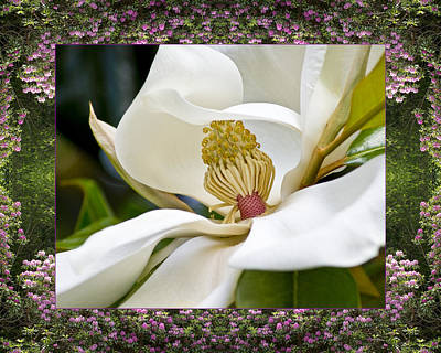 Spiritual. Geometric Photograph - Mountain Magnolia by Bell And Todd