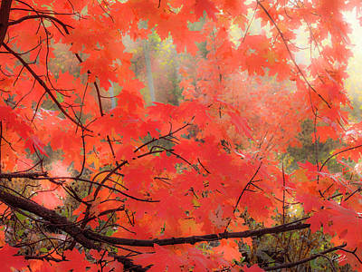 Photograph - Mountain Maple Color by Leland D Howard
