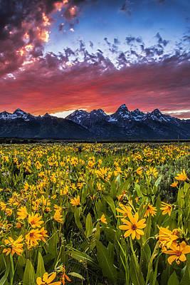 Teton Wall Art - Photograph - Mountain Meadow by Andrew Soundarajan