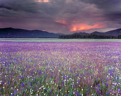 Mountain Meadow Purple Art Print