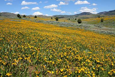 Mountain Meadows Of Yellow Wildflowers Art Print