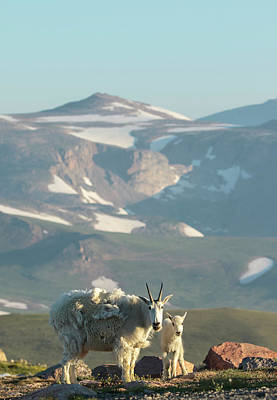 Photograph - Mountain Morning Beauty by Angelique Rea