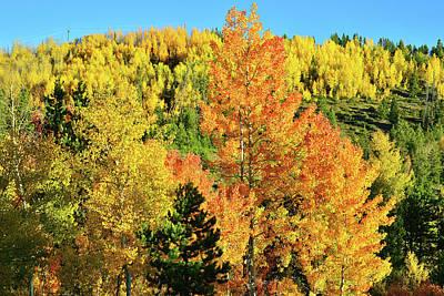 Photograph - Mountain Of Color In Dillon Colorado by Ray Mathis