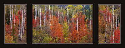 Triptych Photograph - Mountain Of Color by Leland D Howard