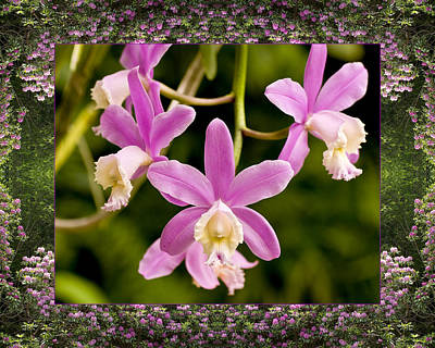Photograph - Mountain Orchids by Bell And Todd