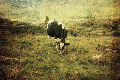 Photograph - Mountain Pastures  by Vittorio Chiampan