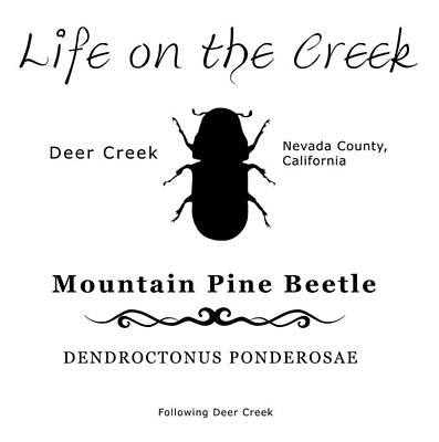 Digital Art - Mountain Pine Beetle Black On White by Lisa Redfern