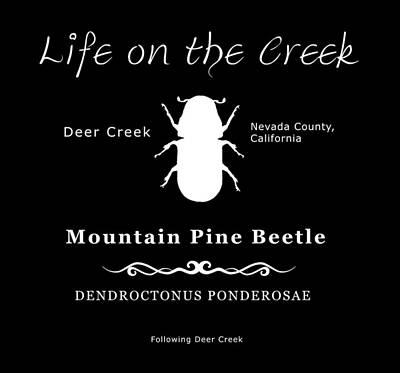Mountain Pine Beetle White On Black Art Print