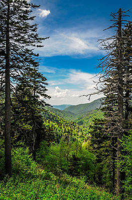 Photograph - Mountain Pines by James L Bartlett