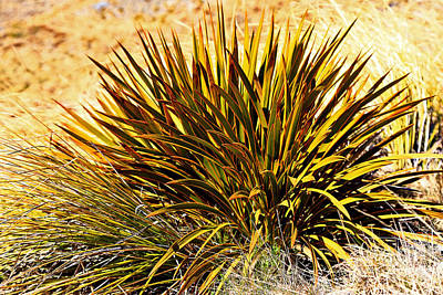 Photograph - Mountain Speargrass by Nareeta Martin