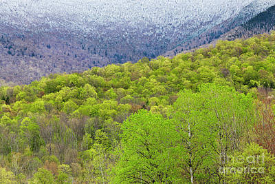 Photograph - Mountain Spring by Alan L Graham