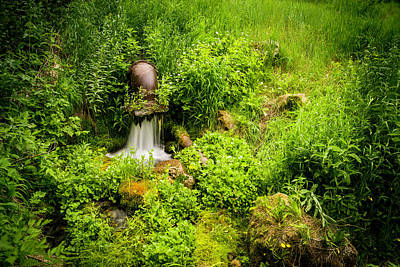 Photograph - Mountain Spring by TL Mair