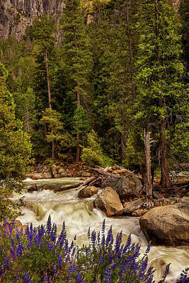 Mountain Stream Print by Andrew Soundarajan