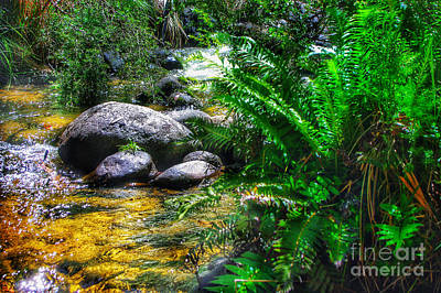 Photograph - Mountain Stream by Blair Stuart