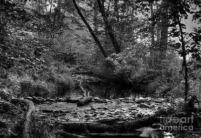 Photograph - Mountain Stream by Douglas Stucky
